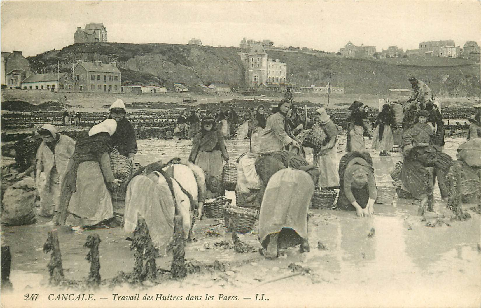 35 CANCALE. Travail des Huîtres dans les Parcs. Métiers de la Mer 1912