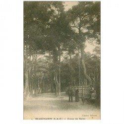 carte postale ancienne 95 BEAUCHAMPS. Avenue des Sapins animée avec Chien vers 1910-15