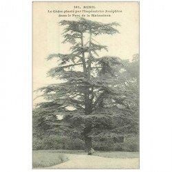 carte postale ancienne 92 RUEIL MALMAISON. Cèdre planté par Joséphine