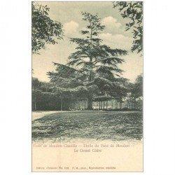 carte postale ancienne 92 MEUDON. Forêt, le Grand Cèdre Etoile du Pavé de Chaville