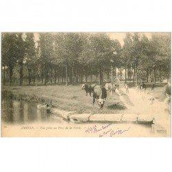 carte postale ancienne 80 AMIENS. Vaches au Parc de la Hotoie 1903