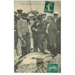 carte postale ancienne 80 CAYEUX SUR MER. Pêche d'un Dauphin de 200 kg 1909. Carte devenue rarissime... Métiers de la Mer