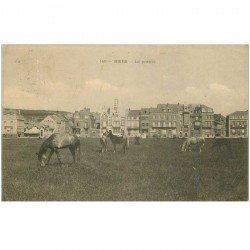 carte postale ancienne 80 MERS-LES-BAINS. Chevaux dans la Prairie 1908