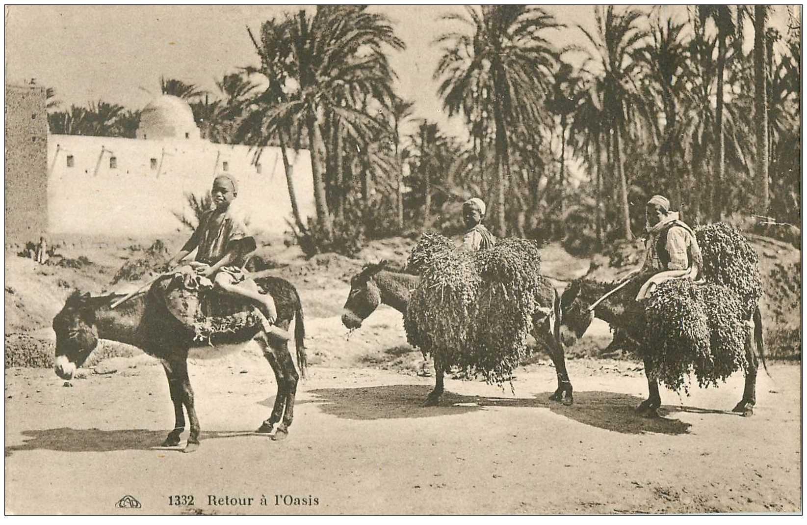 carte postale ancienne EGYPTE. Retour à l'Oasis avec Dattes sur mules ou nes