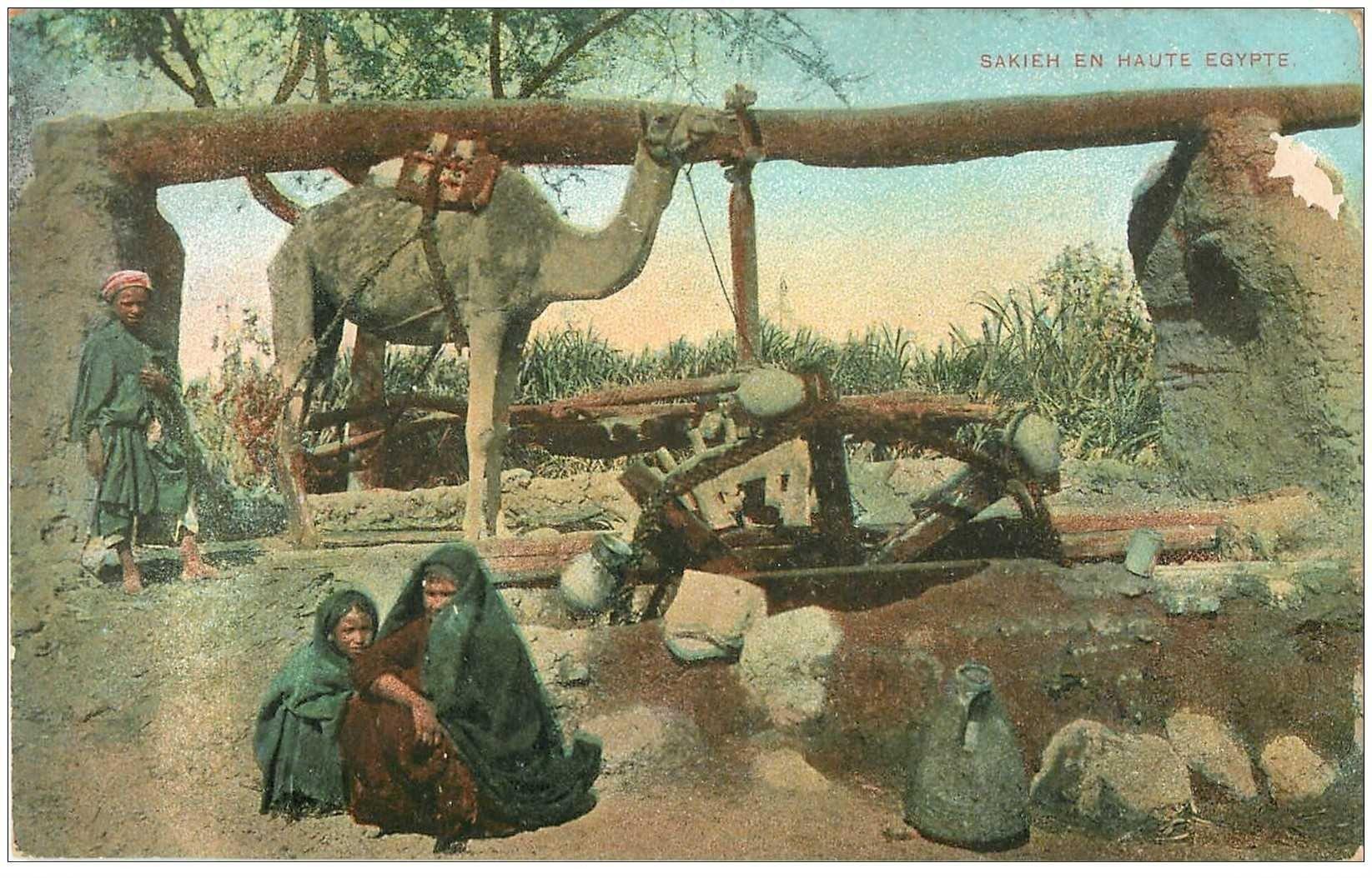 carte postale ancienne EGYPTE. Sakieh en Haute Egypte le tirage de l'eau au Puits avec Chameau