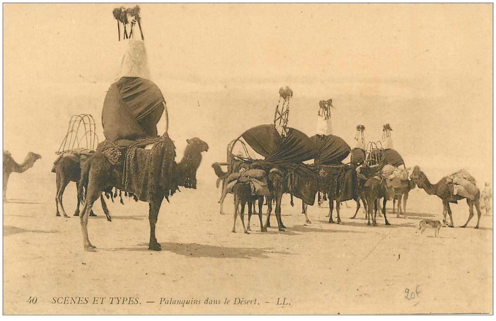 carte postale ancienne Maroc. Palanquins dans le Désert Méhari de Chameaux