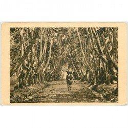 carte postale ancienne GABON. Allée de Ficus A.E.F