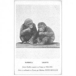 carte postale ancienne GABON. Jeunes Gorilles capturés en 1924 et élevés par Petit Renaud