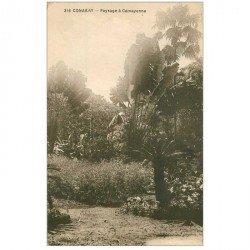 carte postale ancienne GUINEE. Conakry. Paysage à Camayenne