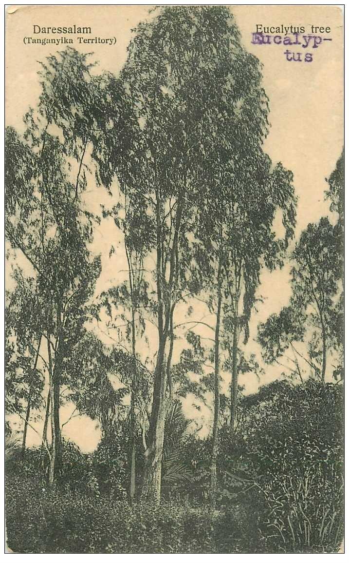 carte postale ancienne TANZANIE. Eucalyptus à Daressalam