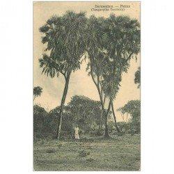 carte postale ancienne TANZANIE. Palms Palmiers à Daressalam
