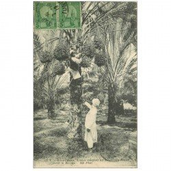 carte postale ancienne TUNISIE. Arabes enlevant les mauvaises Dattes avant la Récolte 1912