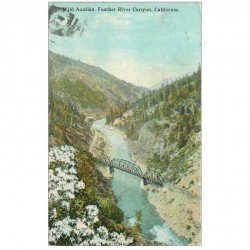 carte postale ancienne CALIFORNIA. Wild Azalias Feather River Canyon 1932