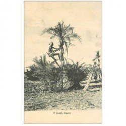 carte postale ancienne INDE. A Toddy drawer
