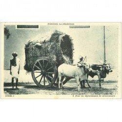 carte postale ancienne INDE. Attelage de Zébus pour déplacements du Missionnaire