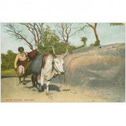 carte postale ancienne INDE. Ceylan Ceylon. Water Carrier avec Zébu Porteur d'eau