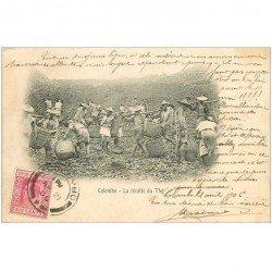 carte postale ancienne INDE. Colombo. La récolte du Thé 1906