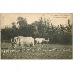 carte postale ancienne VIET NAM. Saïgon. Buffles de Rizières 1924