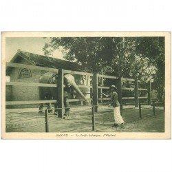 carte postale ancienne VIET NAM. Saïgon. Eléphant au Jardin botanique