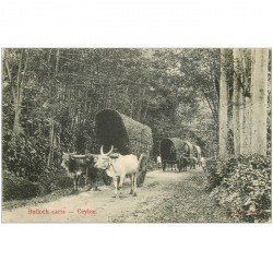 carte postale ancienne SRI LANKA. Ceylan Ceylon. Bulloch carts 1908