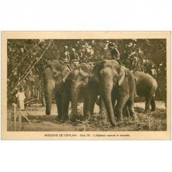 carte postale ancienne SRI LANKA. Ceylan l'Eléphant capturé et encadré
