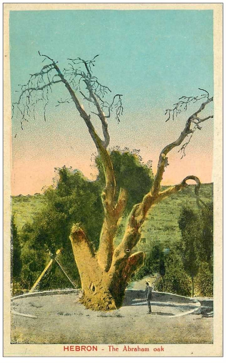 carte postale ancienne ISRAEL PALESTINE. Hebron the Abraham oak 1928