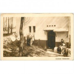 carte postale ancienne ISRAEL PALESTINE. Lot n°2 de 10 cpa. Jérusalem, Nazareth, Bethléhem, Monte Carmelo.