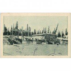 carte postale ancienne ANIMAUX. Chiens de traineau en voyage sur le Cercle Arctique. Alaska