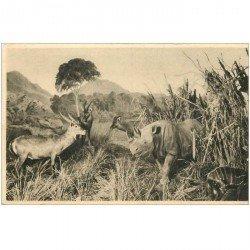 carte postale ancienne ANIMAUX. Galeries du Duc d'Orléans. Rhinocéros