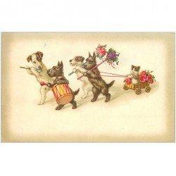 carte postale ancienne CHIENS. Parade musicale avec Chat