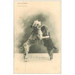carte postale ancienne LES CHIENS PAR BERGERET. Un Tour de Valse vers 1900