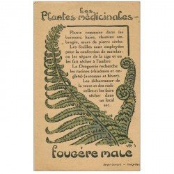carte postale ancienne FLEURS. Plantes médicinales. Fougère male