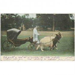SUISSE. Attelage de Chèvres à cou noir 1904