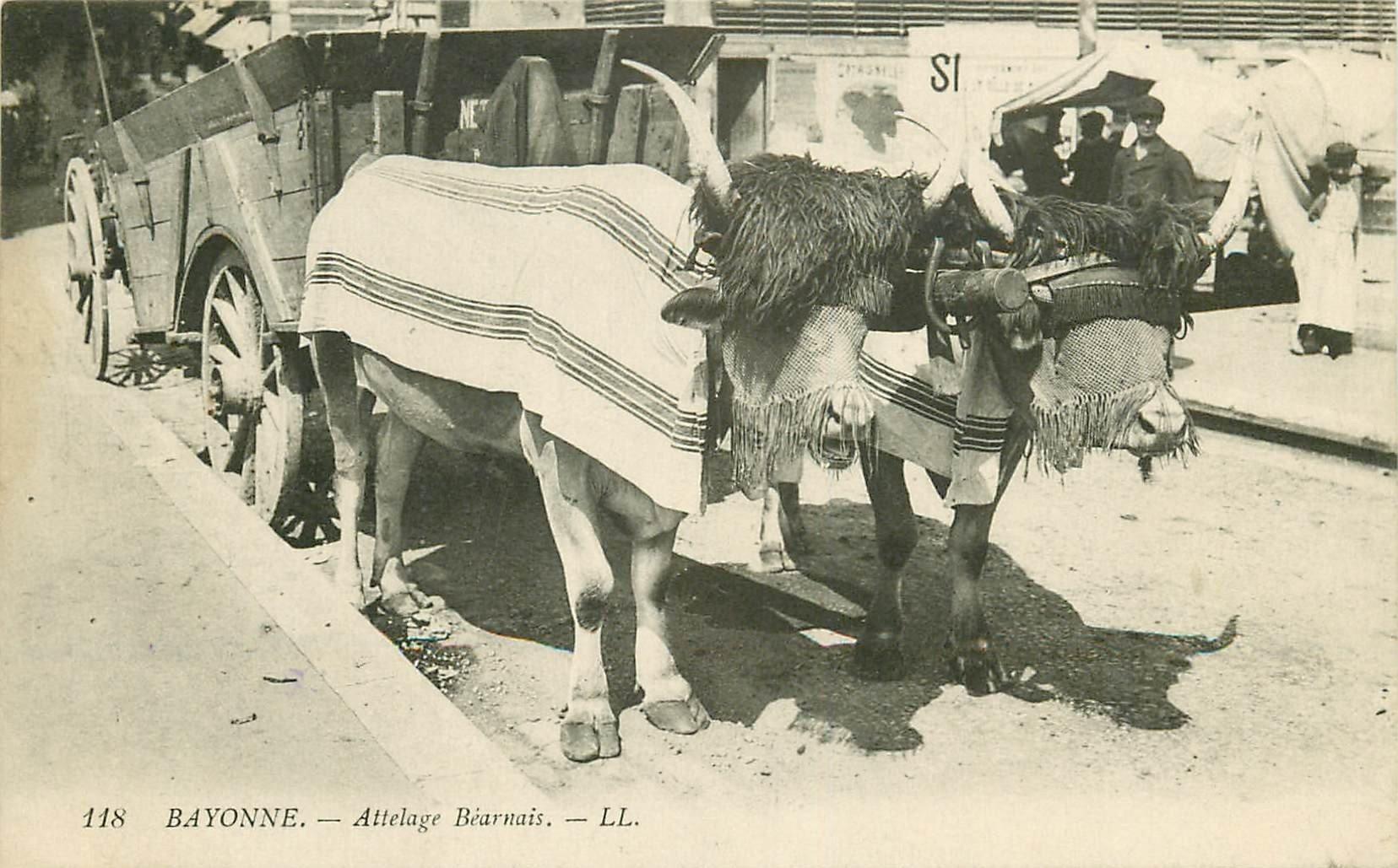 64 BAYONNE. Attelage de Boeufs Béarnais 1914