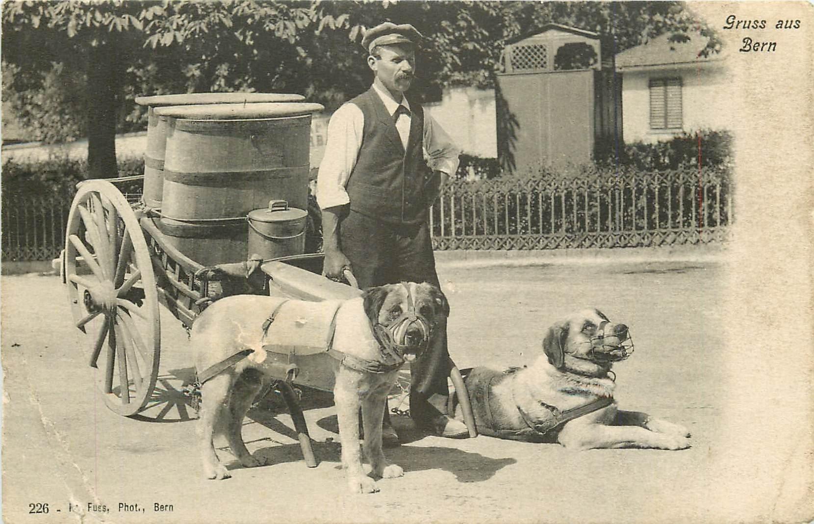 WW BERN BERNE. Attelage de chiens pour transport de lait 1919