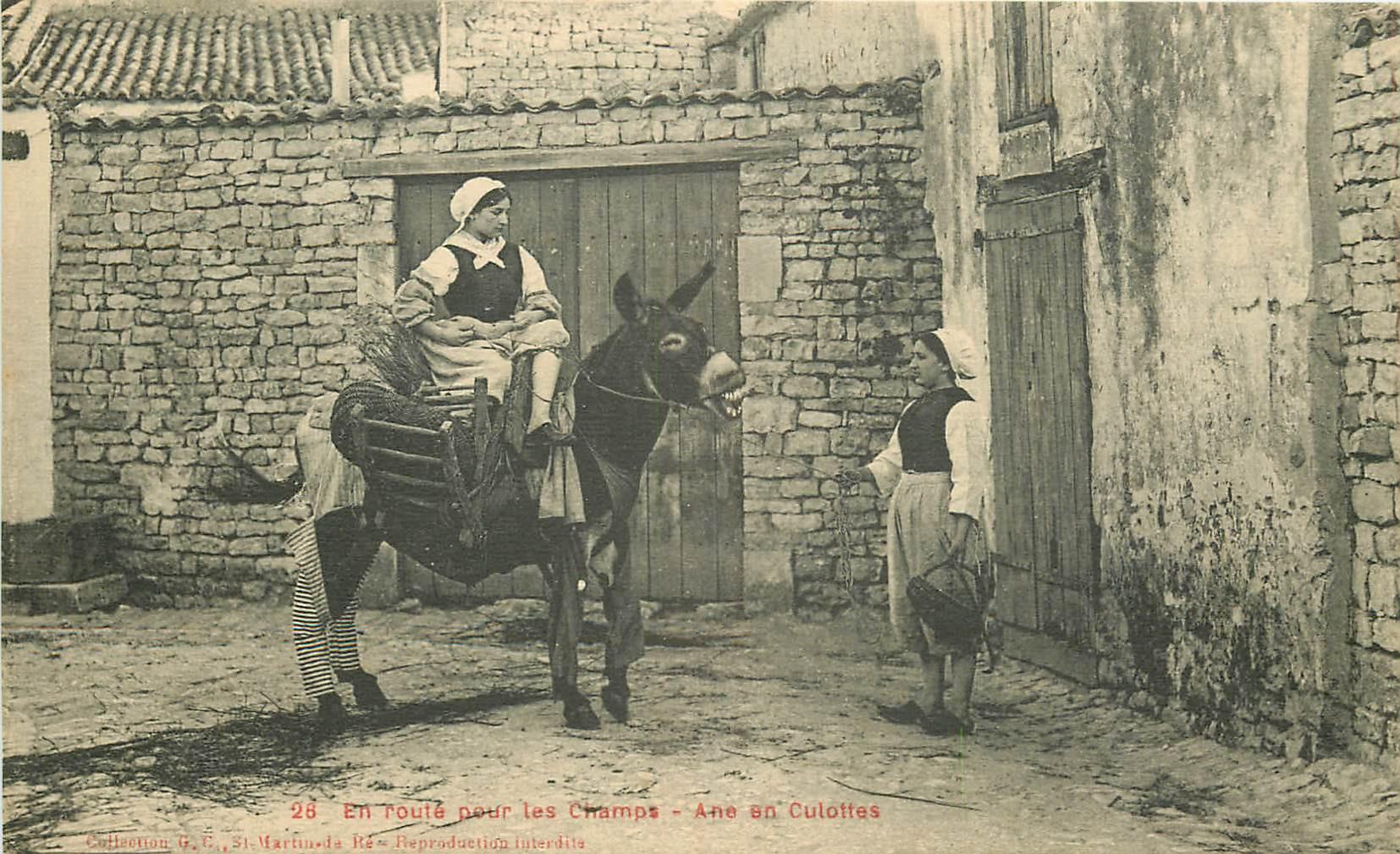 WW 17 SAINT-MARTIN DE RE. Ane en Culottes en route pour les Champs