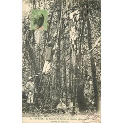 WW MARONI. Saignée des Balatas au Chantier pénitenciaire forestier de Coswine 1908