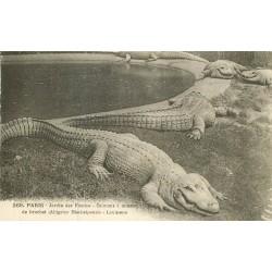 WW Animaux au Jardin des Plantes de Paris. Caïman à museau de Brochet