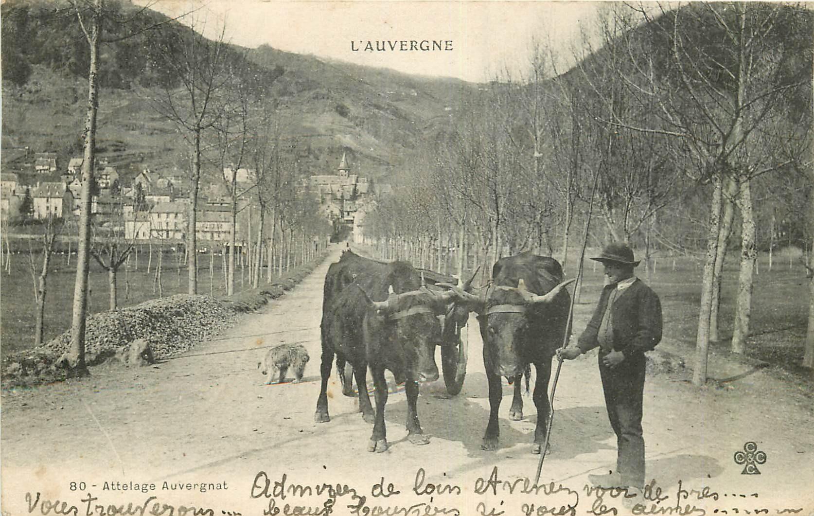 WW 63 AUVERGNE. Paysan avec Attelage de Boeufs Auvergnat 1902