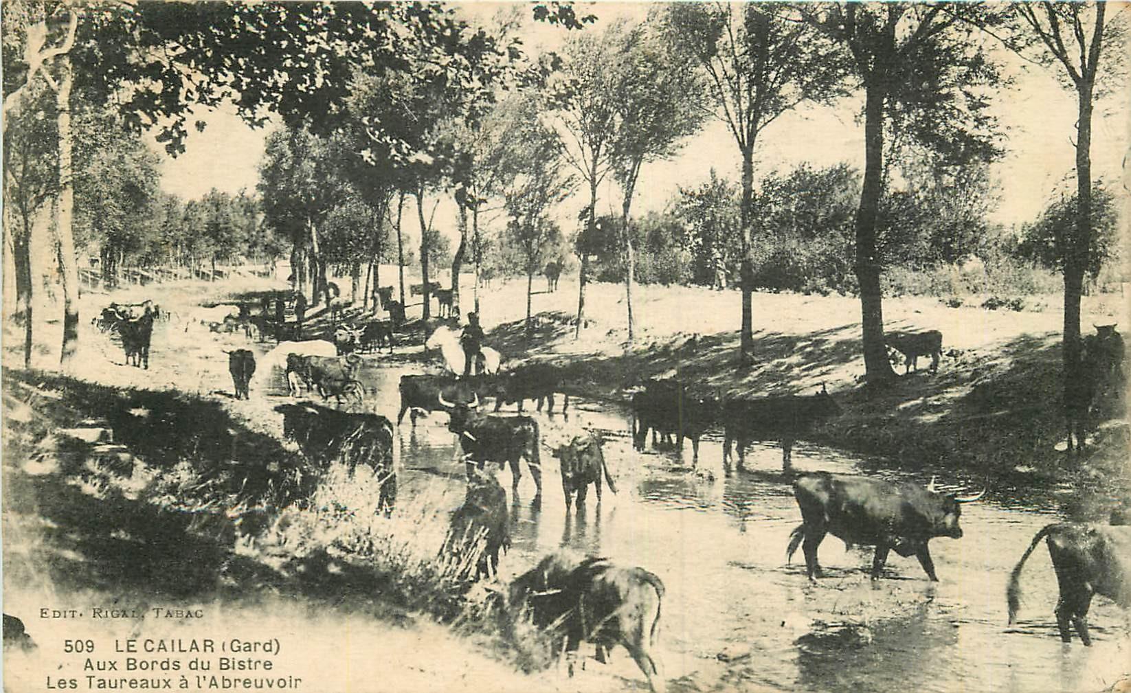 WW 30 LE CAILAR. Taureaux à l'Abreuvoir bords du Bistre