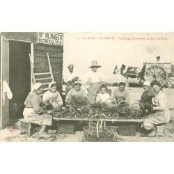 17 LA FLOTTE. Le Triage des Huîtres au Parc du Purey à l'Île de Ré