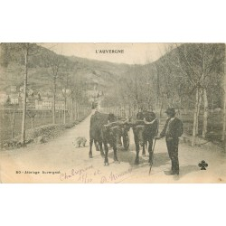 63 AUVERGNE. Attelage Auvergnat 1902