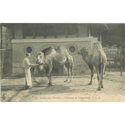 75 PARIS V. Chameau et Dromadaire au Jardin des Plantes 1905