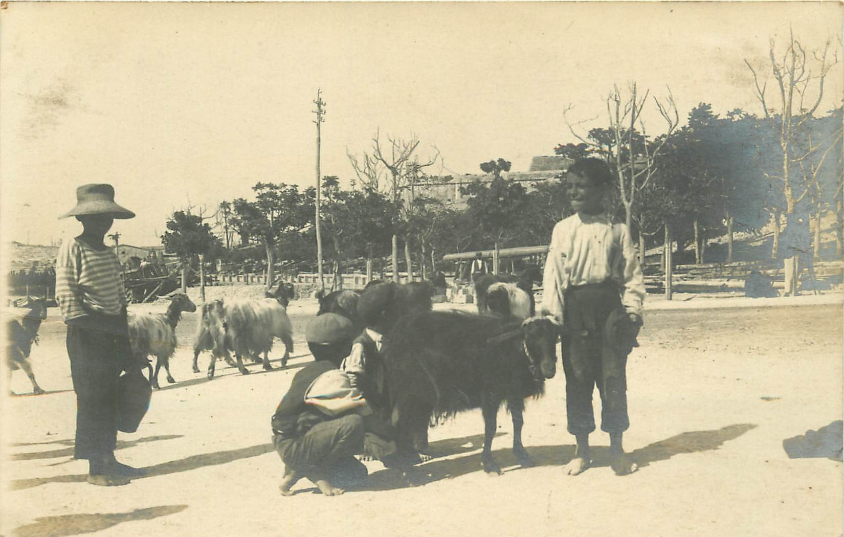 MALTA MALTE. Photo cpa rare jeunes Chevriers faisant la traite d'un Biquette