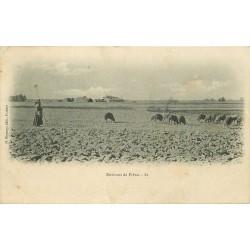 31 PIBRAC environs. Gardienne de Moutons et maison de Sainte-Germaine 1909