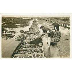 33 ARCACHON. Ramassage de crustacés au Parc à Huîtres