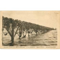 83 RADE DE TOULON. Le séchage des Moules aux Grands Parcs de la Méditerranée