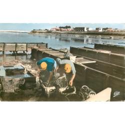 17 CHATELAILLON. Préparation expédition des Moules par les Boucholeurs