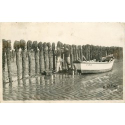 17 ILE OLERON BOYARDVILLE. Récolte des Moules de Bouchots 1950
