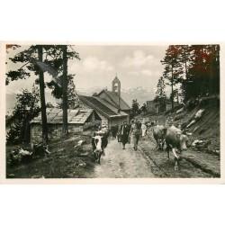 Photo Cpsm 06 PEIRA-CAVA. Départ d'un troupeau de Vaches pour le Pâturage 1934